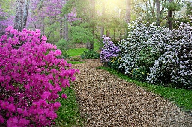 rododendrony u cesty